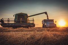 Combine harvester machine working in a wheat field at sunset royalty free stock image