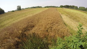 Combine harvester moving oilseed rape, time lapse 4K stock footage