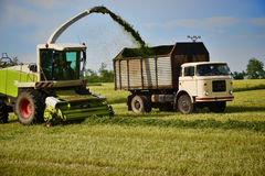 Combine harvester mows the field, harvester unloading into a tractor trailer Stock Photography
