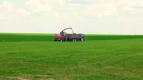 Combine harvester mows the green grass. cattle feed preparation.  stock footage