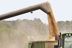 Combine harvester offloading grain Royalty Free Stock Image