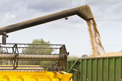 Combine harvester offloading grain Royalty Free Stock Images
