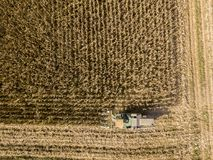 Combine harvester picking seed from fields, aerial view of a field with a combine harvester with cornhusker gathering the crop. Agriculture and cultivation Stock Photos