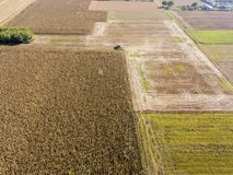 Combine harvester picking seed from fields, aerial view of a field with a combine harvester with cornhusker gathering the crop. Agriculture and cultivation Royalty Free Stock Image