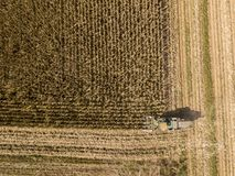 Combine harvester picking seed from fields, aerial view of a field with a combine harvester with cornhusker gathering the crop. Agriculture and cultivation Royalty Free Stock Photo