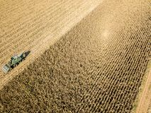 Combine harvester picking seed from fields, aerial view of a field with a combine harvester with cornhusker gathering the crop. Agriculture and cultivation Royalty Free Stock Photos