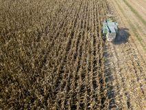 Combine harvester picking seed from fields, aerial view of a field with a combine harvester with cornhusker gathering the crop. Agriculture and cultivation Stock Images