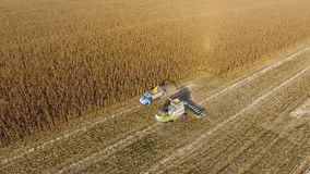 Combine harvester pours corn grain into the truck body. Harvester harvests corn. Royalty Free Stock Image
