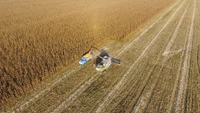 Combine harvester pours corn grain into the truck body. Harvester harvests corn. Stock Photography