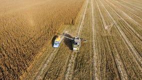 Combine harvester pours corn grain into the truck body. Harvester harvests corn. Stock Image