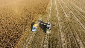 Combine harvester pours corn grain into the truck body. Harvester harvests corn. Collect corn cobs with the help of a combine harvester. Ripe corn on the field Stock Image