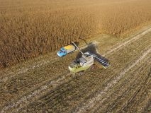 Combine harvester pours corn grain into the truck body. Harvester harvests corn. Collect corn cobs with the help of a combine harvester. Ripe corn on the field royalty free stock photography