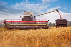 Combine-harvester pours wheat grain to trucks. Cloudly bly sky. Horizontal. Working concept Stock Photos