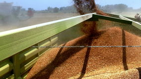 Combine Harvester - Powerful Machine stock video