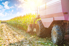Combine harvester in process of harvesting maize Stock Photo