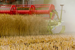 Combine harvester at rape harvest Royalty Free Stock Images