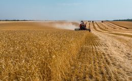 The combine harvester removes wheat fields. stock photo
