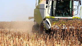Combine Harvester and sunflower stock video