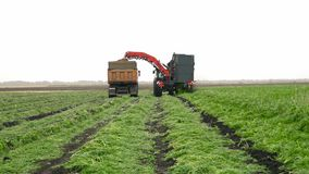 Combine harvester harvest potato. Combine harvester and a tractor in a field harvest carrot. Agriculture industry scene. Autumn season time stock footage