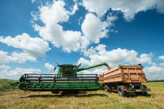 Combine harvester transferring freshly harvested wheat to tractor-trailer for transport Stock Photos