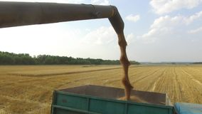 Combine harvester unloading architecture grain into a wagon. Combine harvester grain Stock Photo