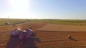 Combine Harvester Unloading Grain Into Trailer. AERIAL VIEW. Agricultural landscape with golden field with bales of hale scattered around and combine harvester stock video