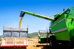 Combine harvester unloading wheat in truck Royalty Free Stock Photo