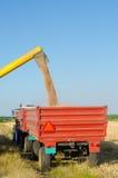 Combine harvester unloads wheat grain into tractor trailer Stock Images