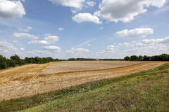 Combine harvester in wheat field Stock Image