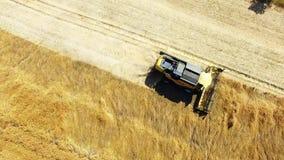 Combine harvester on wheat field. stock video
