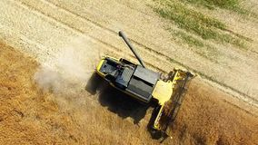 Combine harvester on wheat field. stock footage