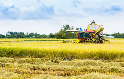 Combine harvester on a wheat field Royalty Free Stock Images