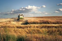 Combine harvester on the wheat field. Harvesting Stock Photo