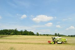 Combine harvester in the wheat field during harvesting Stock Photo