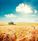 Combine Harvester on a Wheat Field Royalty Free Stock Image