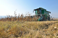 Combine harvester at work on the field Royalty Free Stock Photo