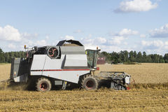 Combine harvester at work in summer Royalty Free Stock Images