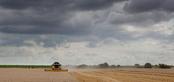 Combine Harvester at work under a heavy sky. Stock Photo