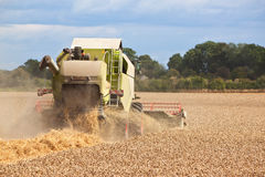Combine harvester working in field. A combine harvester collecting wheat from a field stock photos