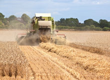 Combine harvester working in field. Rear view of a combine harvester collecting wheat from a field Stock Image