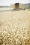Combine Harvester Working In Field Royalty Free Stock Photography