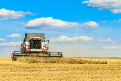 Combine harvester is working in the field. Agricultural work on a sunny day Stock Photo