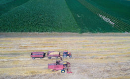 Combine harvester working in golden wheat field. Aerial image of combine harvester and tractor working in ripe golden wheat field. Harvesting in summer time Stock Photo
