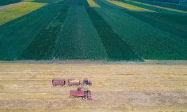 Combine harvester working in golden wheat field Royalty Free Stock Images