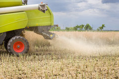 Combine harvester working in rapeseed Royalty Free Stock Image
