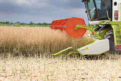 Combine harvester working in rapeseed Royalty Free Stock Photos
