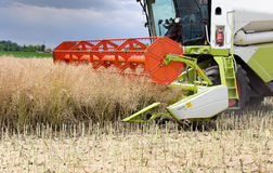 Combine harvester working in rapeseed Stock Photography