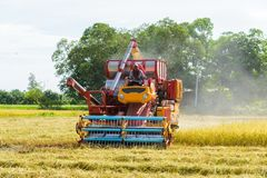 Combine harvester Working on rice field. Harvesting is the process of gathering a ripe crop. From the fields in thailand royalty free stock photo