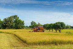 Combine harvester Working on rice field. Harvesting is the process of gathering a ripe crop. From the fields in thailand royalty free stock photography
