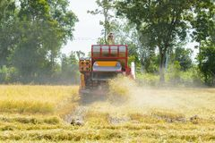 Combine harvester Working on rice field. Harvesting is the process of gathering a ripe crop. From the fields in thailand stock photos